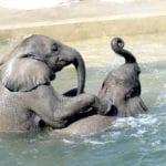 african-elephant-(5)