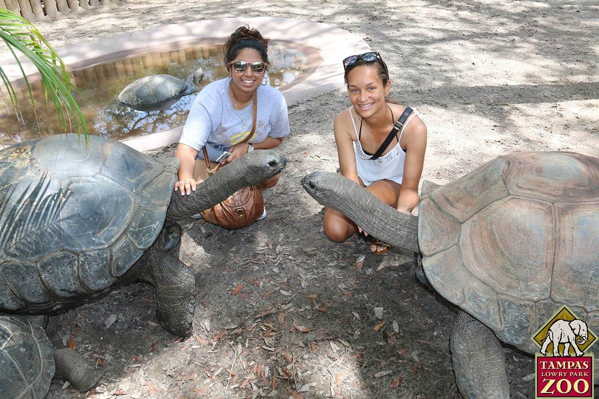 Zoo Animals Group Aldabra Giant Tortoise...