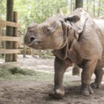 Greater One-Horned Rhinoceros - ZooTampa at Lowry Park