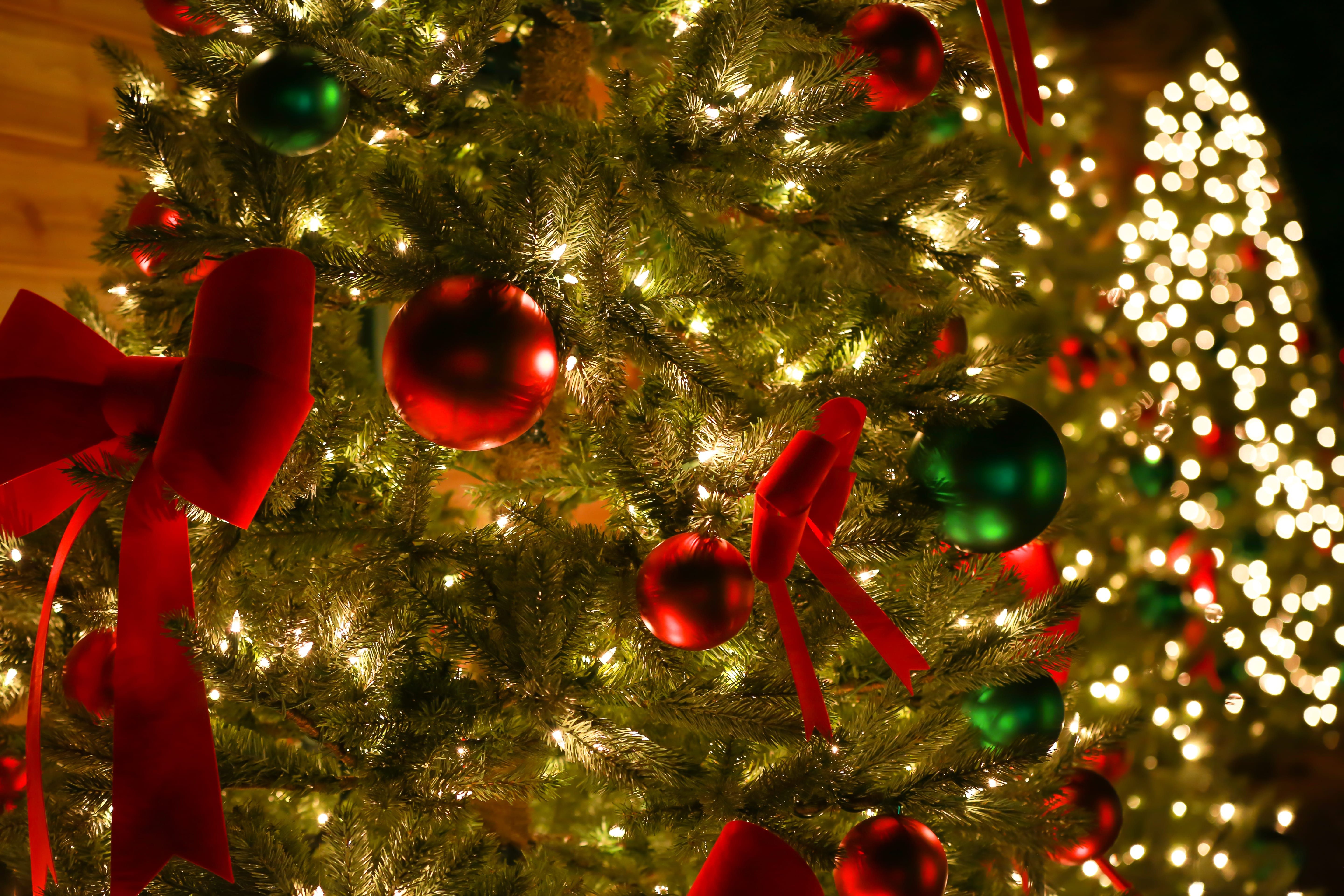 Christmas in the Wild | ZooTampa at Lowry Park