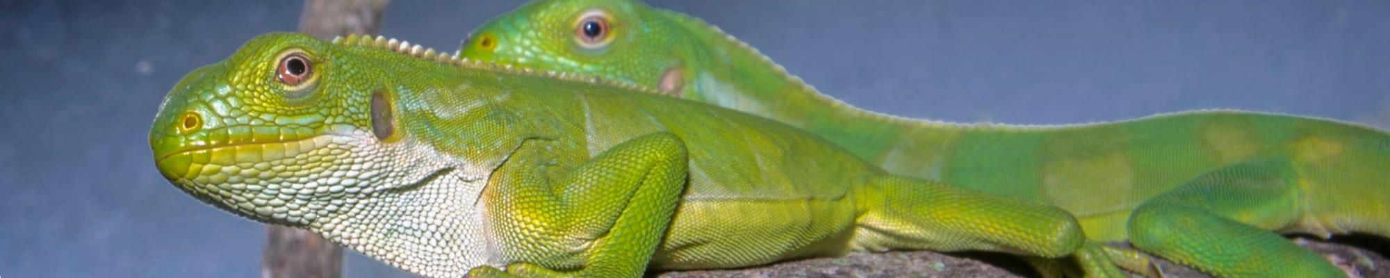 Green, Rare & New at the Zoo