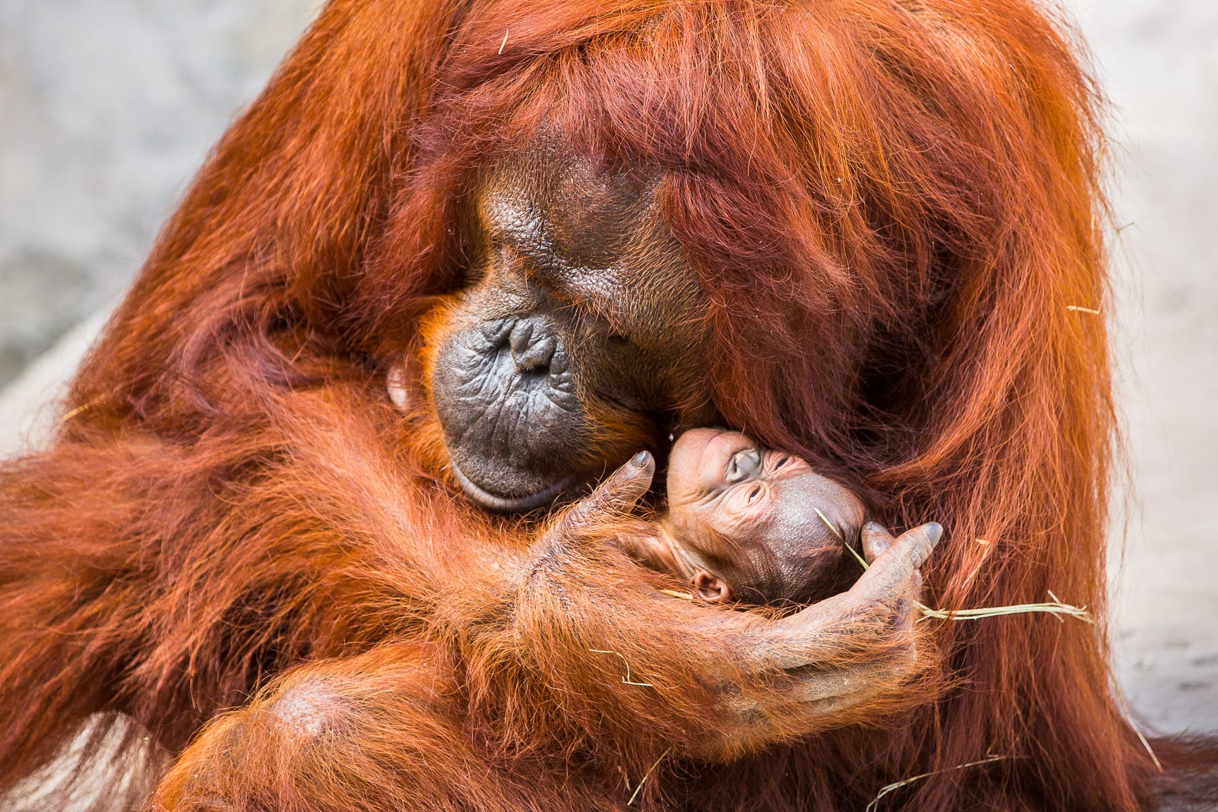 The Bond Of A Mother & Baby, A Message From Our VP Of Conservation