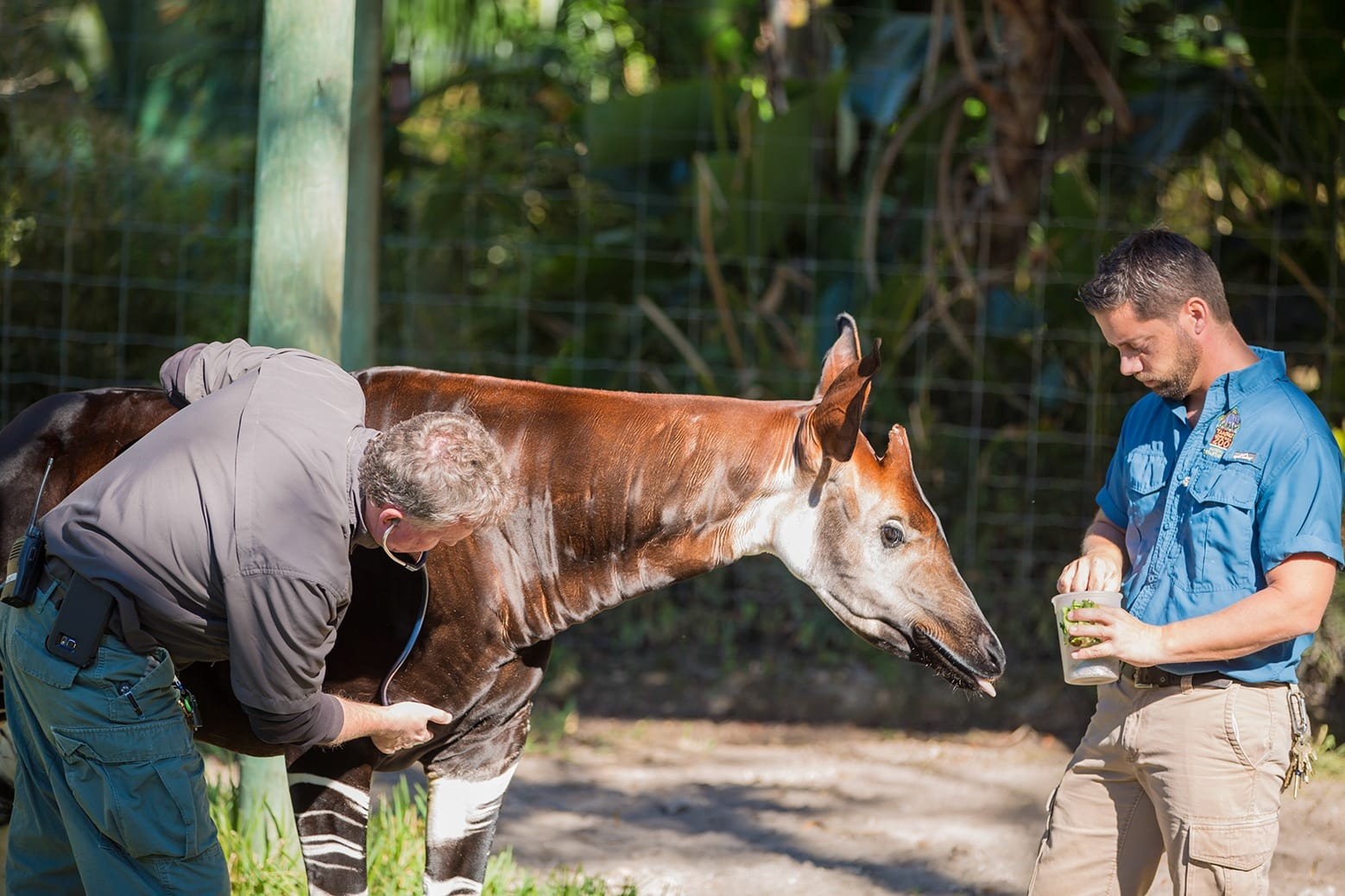 Coming Attractions & Events - ZooTampa at Lowry Park
