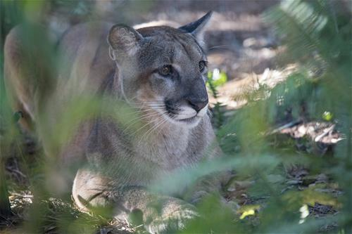 Meet Micanopy - ZooTampa at Lowry Park