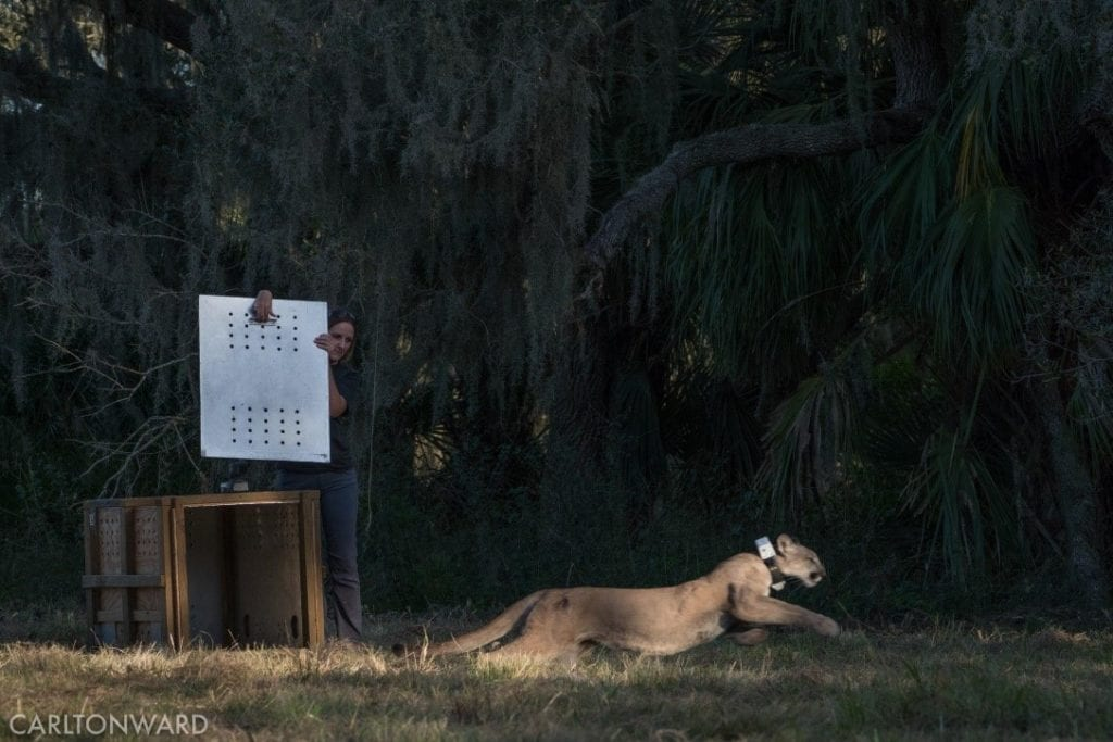 The Story of Tres - ZooTampa at Lowry Park