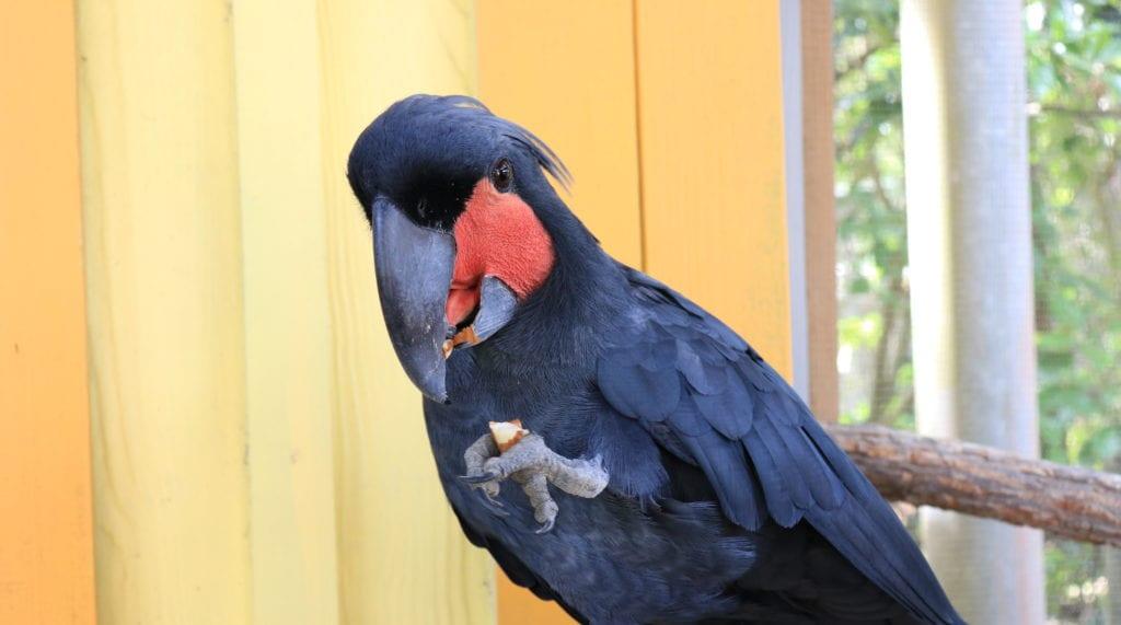 Birdy Spotlight! - ZooTampa at Lowry Park