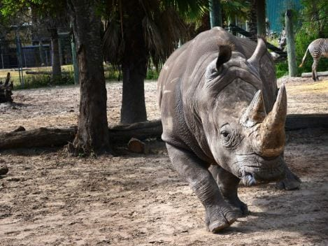 Conservation Education - ZooTampa at Lowry Park
