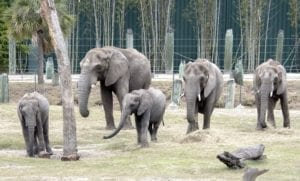 Next Generation of Elephant Management Workshop at ZooTampa