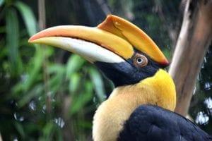 Birdy Spotlight – Hornbills