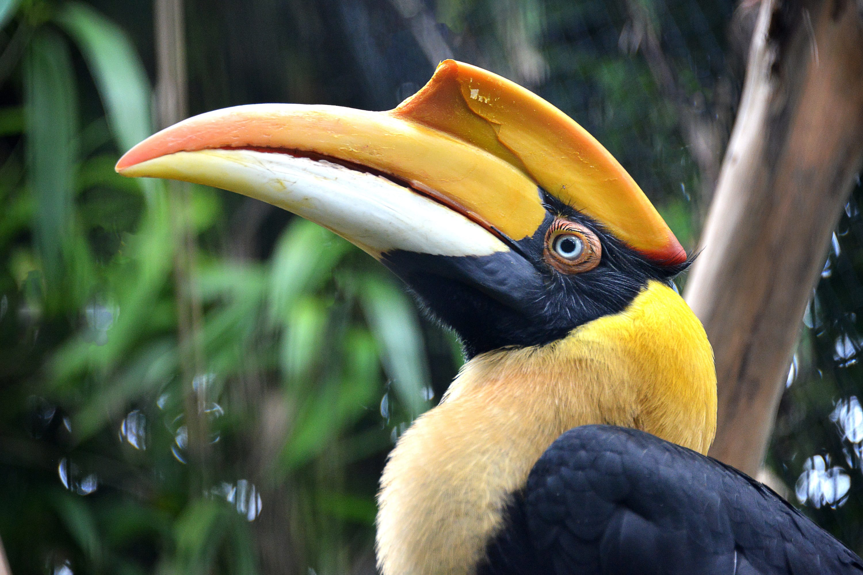 Birdy Spotlight - Hornbills - ZooTampa at Lowry Park