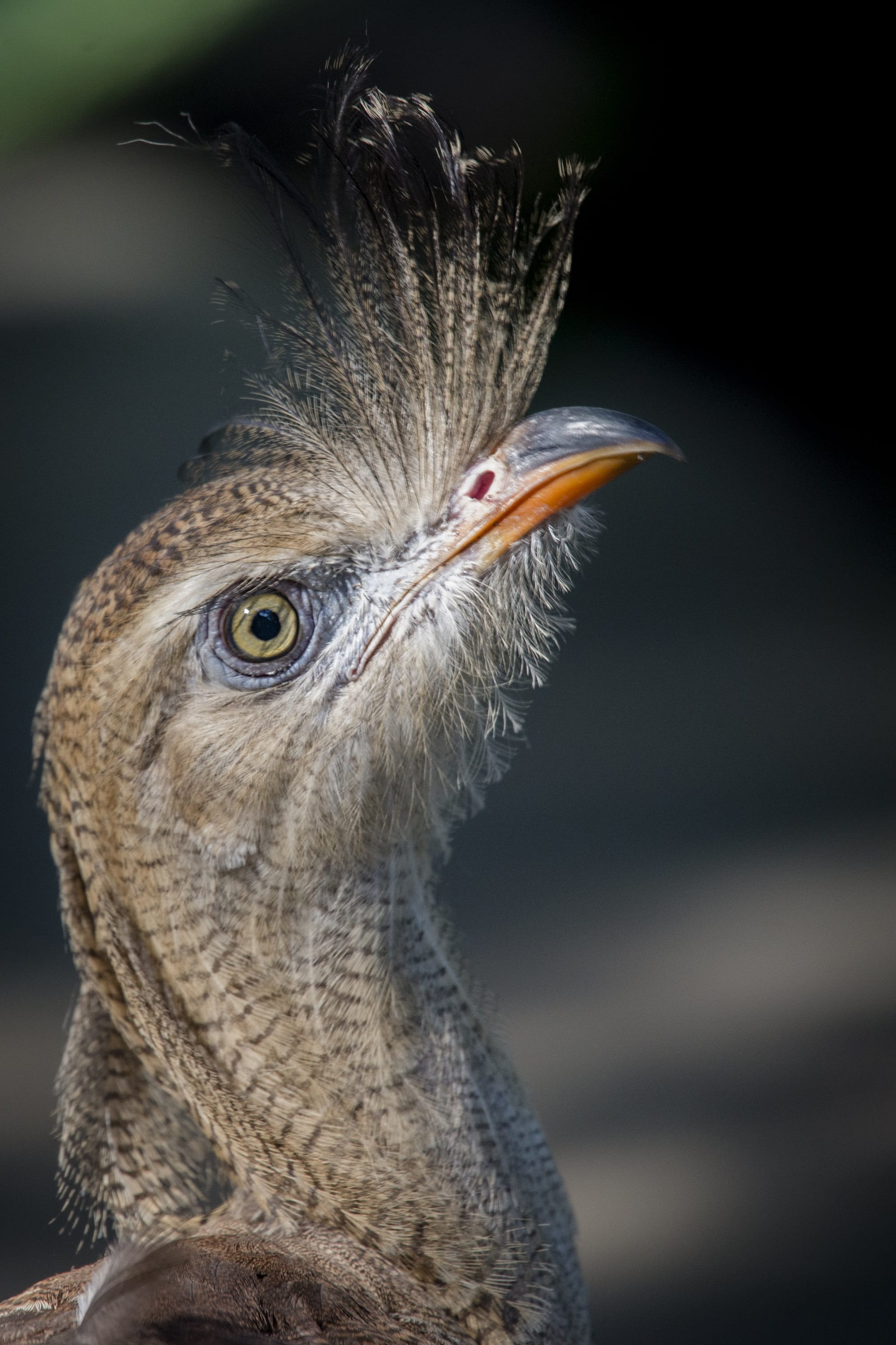A Stunning Bird with a Stunning Surgery - ZooTampa at Lowry Park