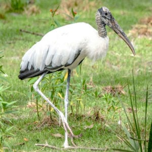 All About Storks