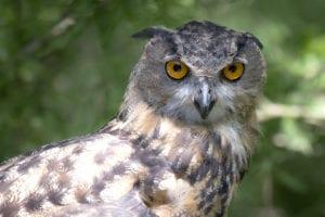 Birdy Spotlight – Owls