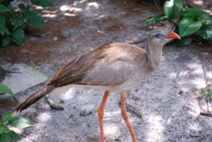 """2018 Year of the Bird Campaign """"Wrap-up"""" - ZooTampa at Lowry Park"""