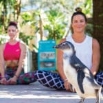 woman practicing yoga with penguin at zootampa