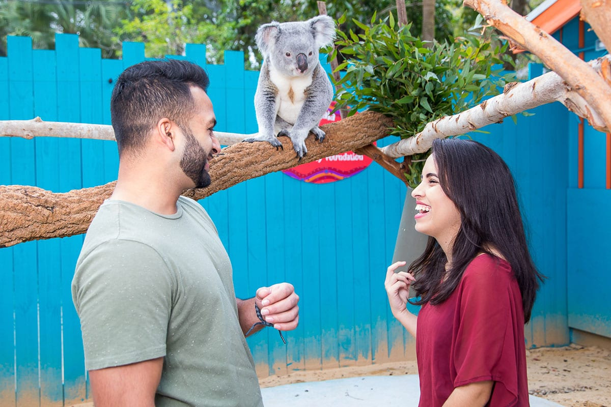 Koala-ty Facts - ZooTampa at Lowry Park