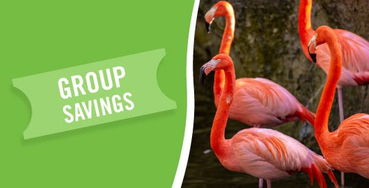 Admission Tickets & Membership - ZooTampa at Lowry Park