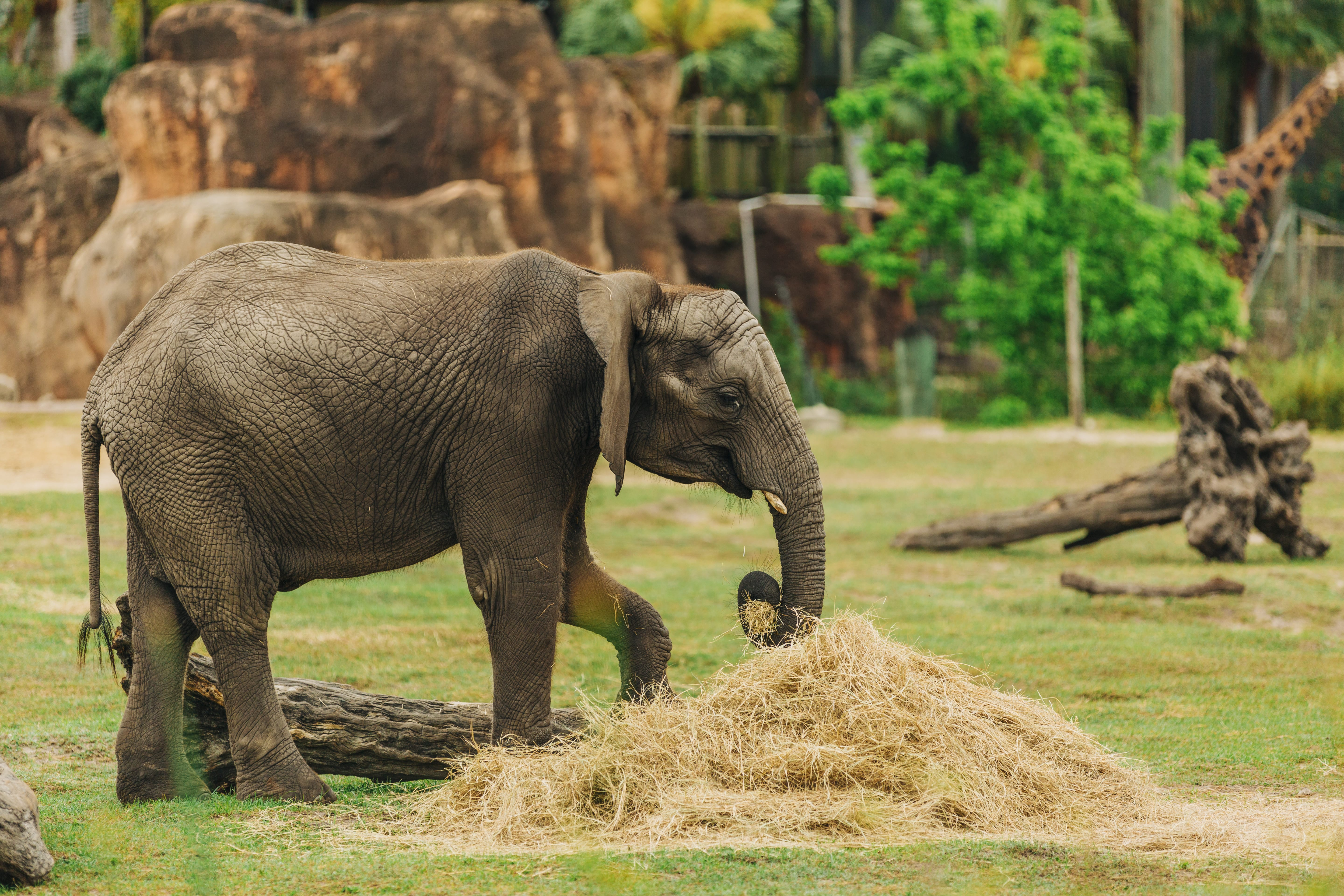 World Elephant Day - ZooTampa at Lowry Park