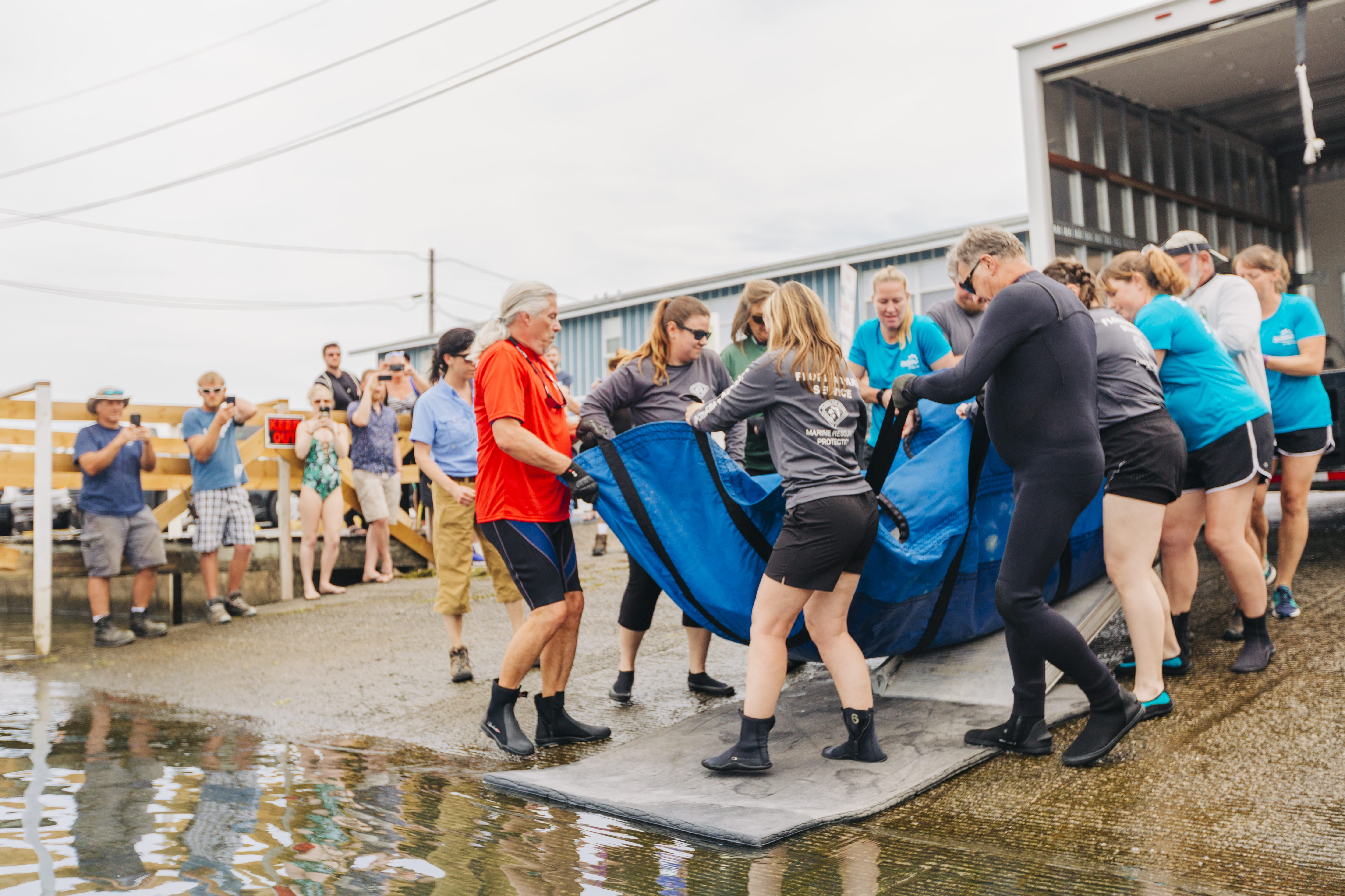 ZooTampa Manatee Rescue Release