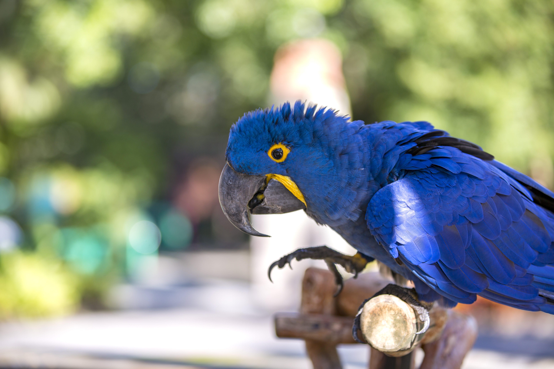 ZooTampa bird macaw Magoo