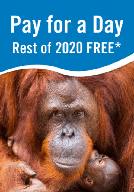 PAY FOR A DAY REST OF YEAR FREE