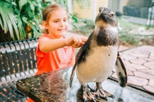 A young girl pets an African Penguin at ZooTampa