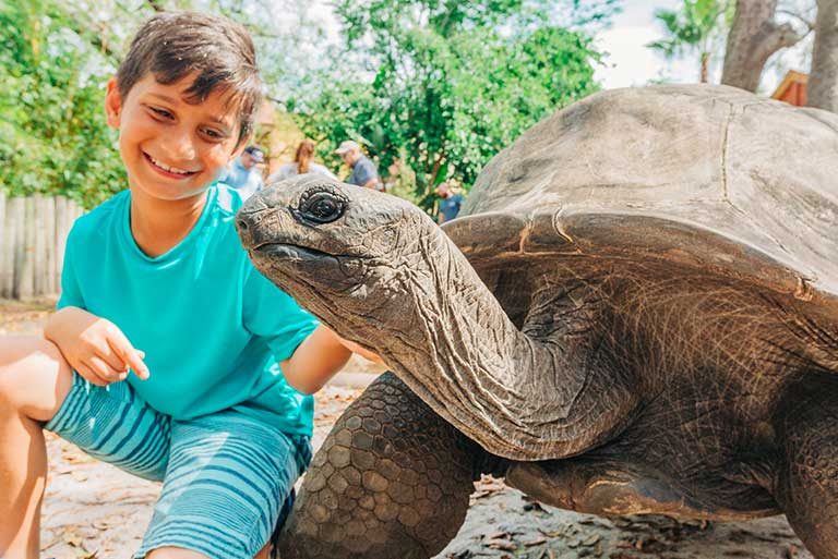 A young boy pets the neck of a big wrinkly Aldabra Tortoise during a Signature Encounter at ZooTampa