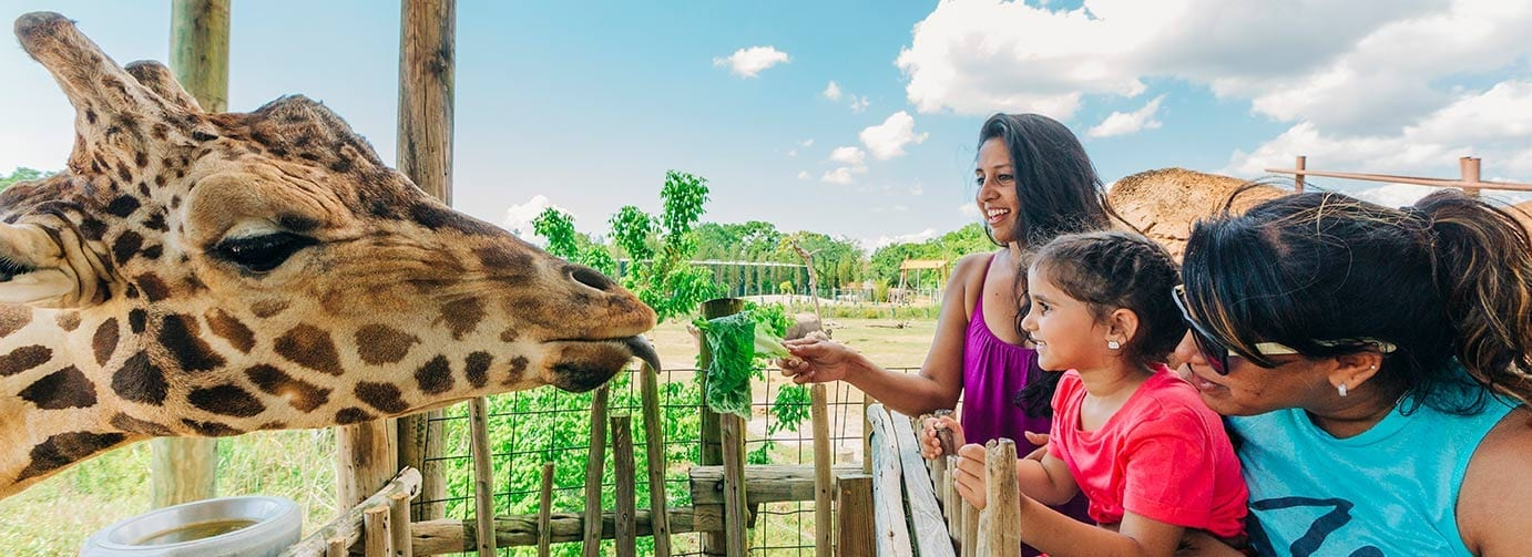 A photo of a family feeding a giraffe during a Signature Encounter at ZooTampa at Lowry Park