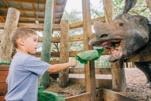 A photo of a boy feeding lettuce to an Indian Rhino