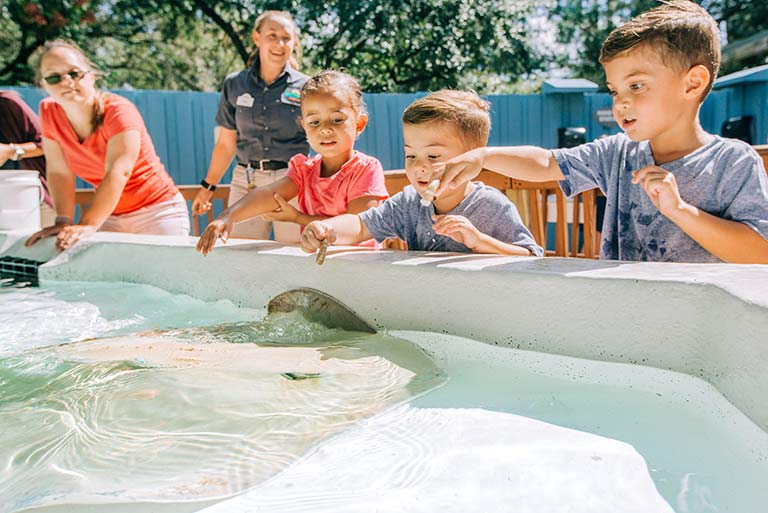 A group of children reach into a pool to pet and feed stingrays as they swim past