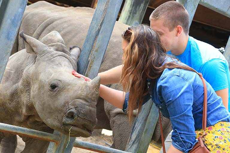 Two people pet a White Rhino at ZooTampa