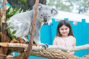 A young girl poses next to a koala as it sits on a tree branch at ZooTampa