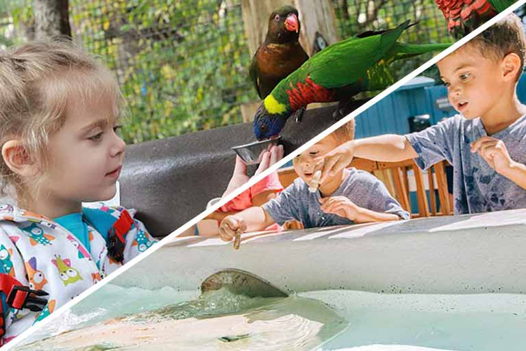 A young girl feeds a group of colorful Lorikeet birds out of the palm of her hand, and a group of children reach into a pool to pet and feed stingrays as they swim past