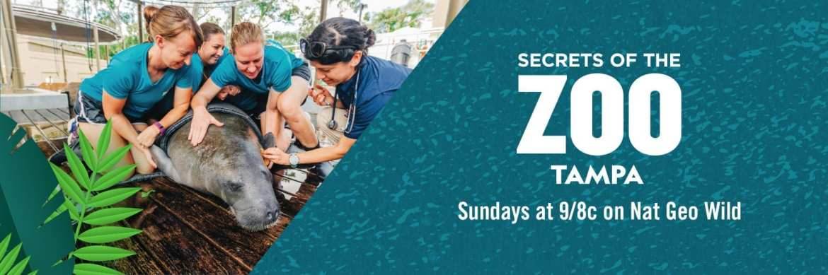 Watch Secrets of the Zoo: Tampa Sunday nights at 9pm Eastern on Nat Geo Wild