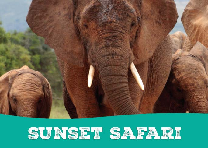 An elephant with the words Sunset Safari