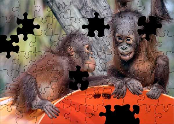 Orangutan puzzle