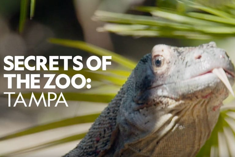 Secrets of the Zoo Tampa featuring a Komodo Dragon