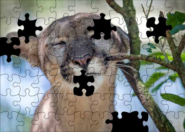 Panther puzzle