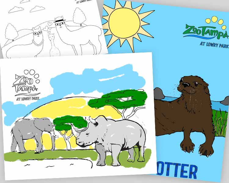 Zoo Coloring Books