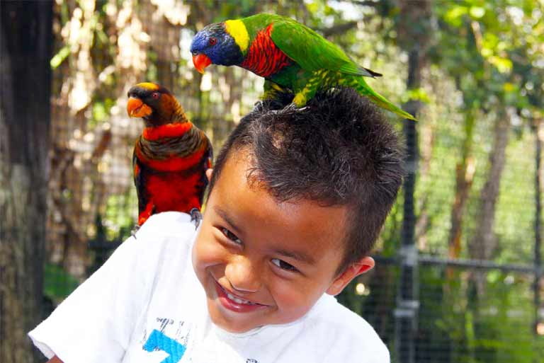 Two colorful lorikeets land on the shoulder of a boy in the lorikeet aviary at ZooTampa