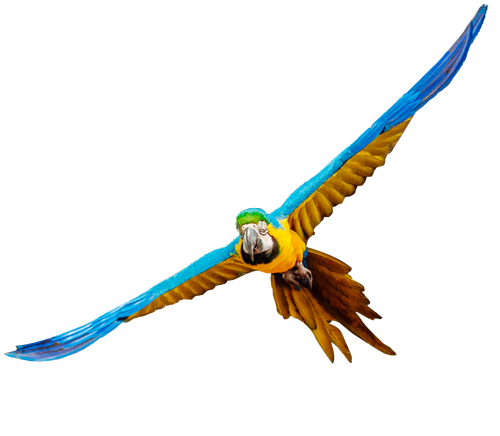 A colorful macaw flying through the sky