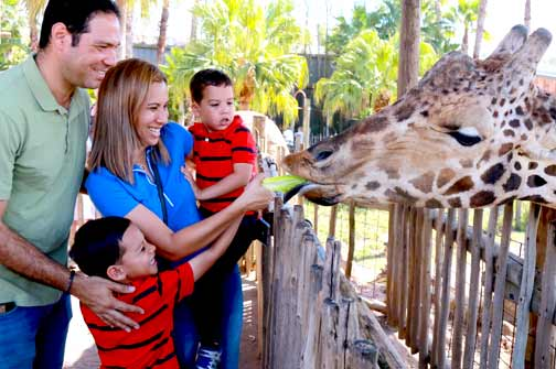 A family feeds lettuce to a giraffe at ZooTampa