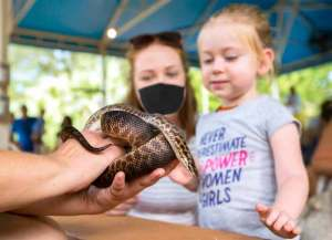 A mom wearing a mask looks on as her young daughter gets to see a snake up-close during Toddler Tuesday at ZooTampa