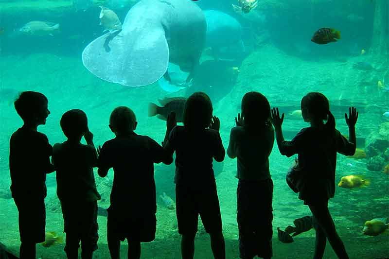 Kids along the glass in Manatee Tunnel